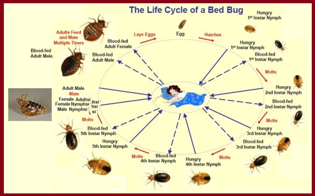 Preventing Bed Bugs In Columbus Central Ohio Bed Bug Control
